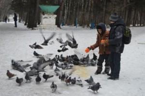 Покормите птиц зимой - и они порадуют вас весенней песенкой