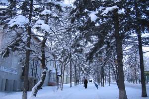 31.01.07-Снег-выпал-018