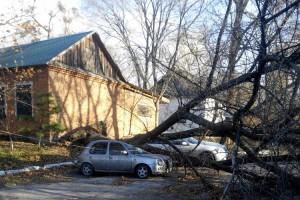 Ураганный ветер повалил полсотни деревьев