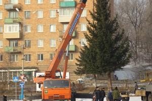 Новогоднюю красавицу выменяли на две машины дров