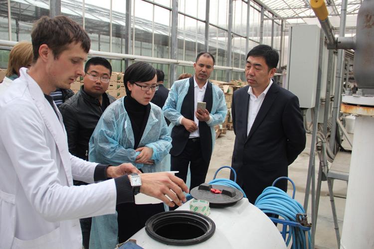 В тепличном комплексе представители китайской делегации знакомились с современными технологиями выращивания овощей и зелени