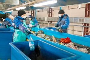 Больше половины отходов можно использовать вторично
