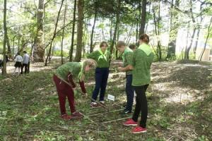Школьники посеяли в городском парке семена кедра