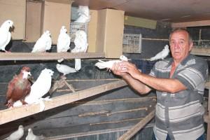 Где бы ни жил и работал - повсюду разводил голубей