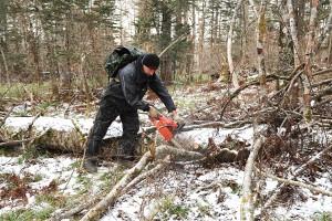 Брать можно то, что лежит на земле, а пилить сухостой и живые деревья нельзя
