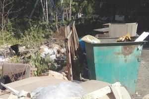 Далеко не всегда в контейнерах только бытовой мусор