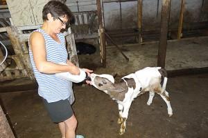 Молочная продукция от фермеров Валентины и Ольги Гуслевых пользуется спросом в Партизанске и Находке