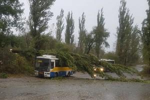 Кроме рейсового автобуса, от упавших деревьев пострадали еще два автомобиля