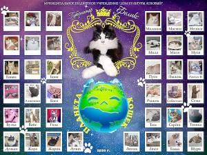 Кот Феликс - победитель конкурса «Кошачье царство»