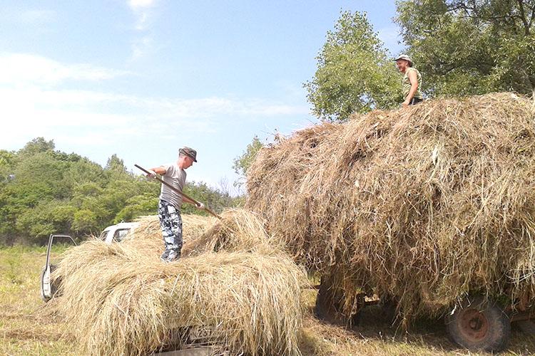 Вместе с полевыми работами начинается заготовка кормов на будущую зиму