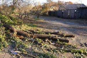 Упавшие у жилых домов деревья, их стволы и ветви считаются валежником, и брать их можно без разрешения