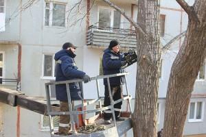 Во дворах многоквартирных домов аварийные деревья и ветви пилят «управляйки»
