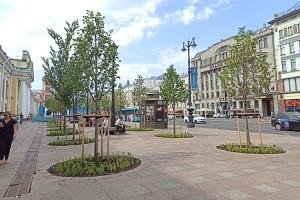 Деревья - большая редкость для Невского проспекта