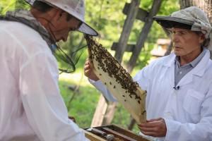Олегу Кожемяко непростой труд пчеловодов хорошо знаком