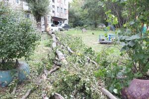 К счастью, упавшее дерево не нанесло большого урона