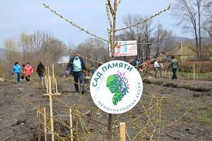75 саженцев нашей аллеи стали частью огромного Сада памяти России
